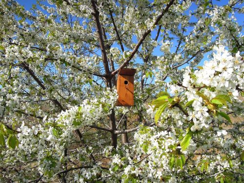 flowering tree bough bird's lair