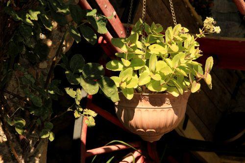 flowerpot pendant leaves