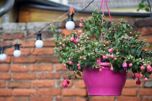 flowerpot hanging plant pink