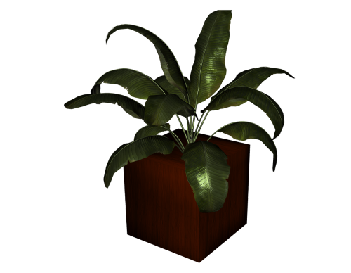 flowerpot plant isolated