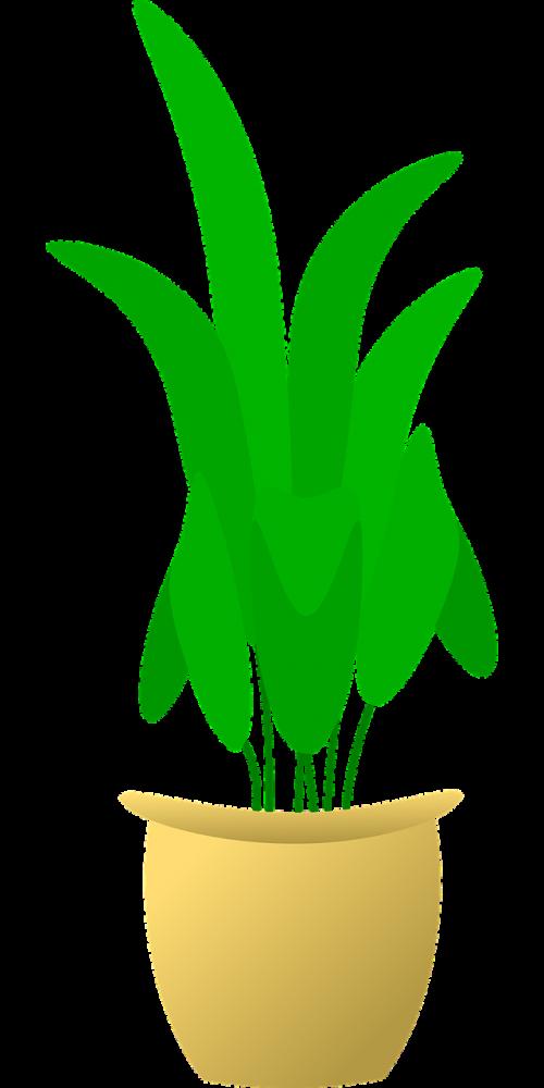 Gelės vazonas,augalas,gėlė,puodą,namai,sodininkystė,flora,sodininkystė,nemokama vektorinė grafika