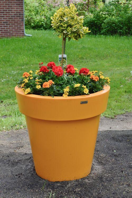flowerpot spring pentecost