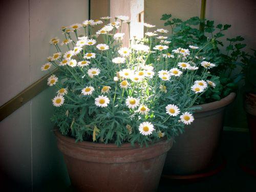 flowerpot bucket balcony