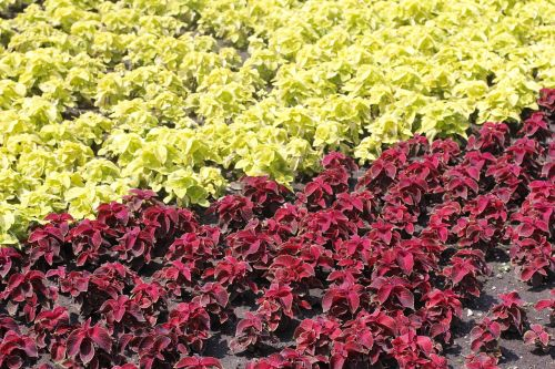 flowers bed garden