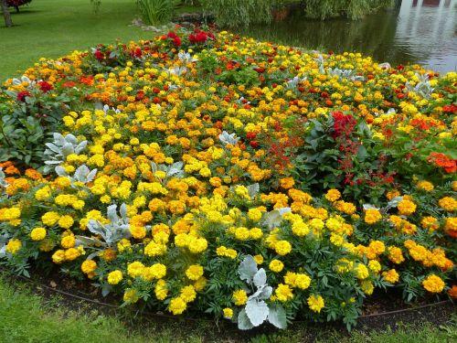 flowers colors garden