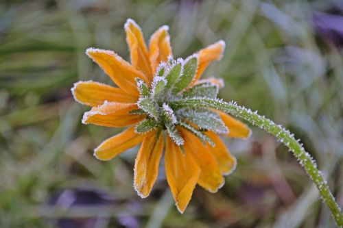 flowers sunflowers rhyme