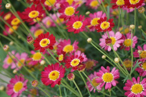flowers nature rhineland palatinate