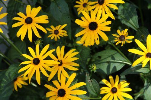 flowers yellow green