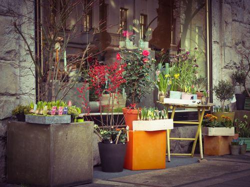 flowers flower shop florist