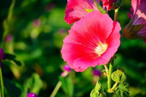 flowers flower shares rise
