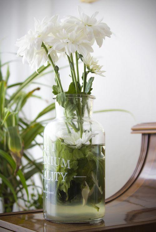 flowers margaritas spring