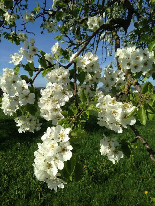 flowers splendor spring