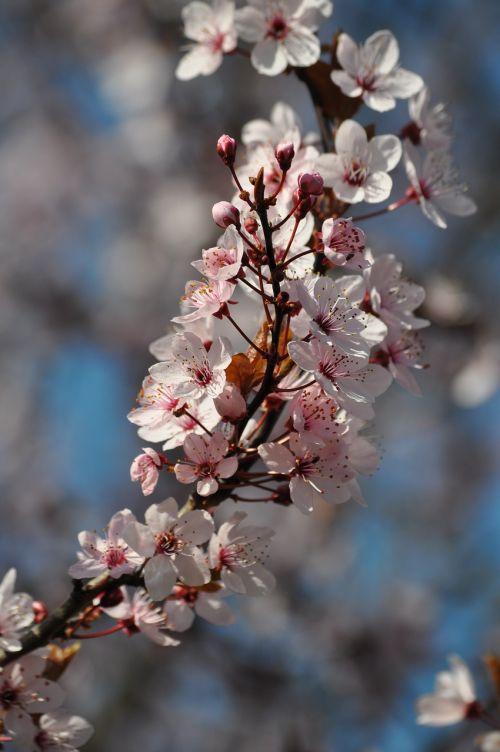 flowers blossom flowering twig