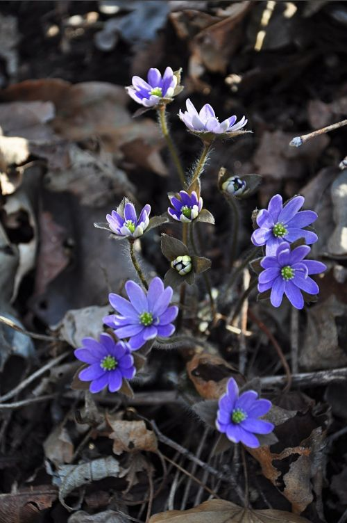 flowers wildflower purple