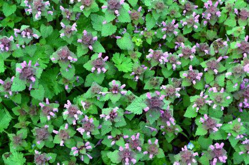 flowers images garden