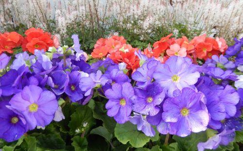 flowers spring flowers summer flowers