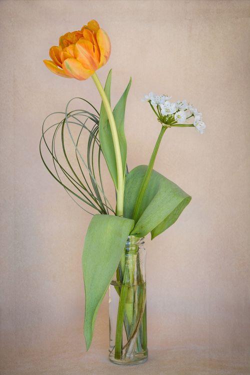 flowers tulip orange