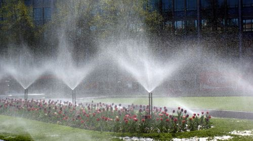 flowers plant irrigation