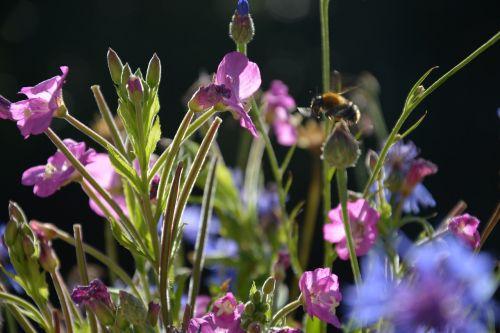 flowers bee blossom