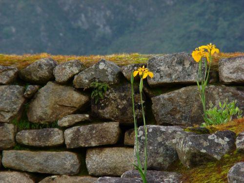 gėlės,Peru,akmenys,inka,architektūra,siena