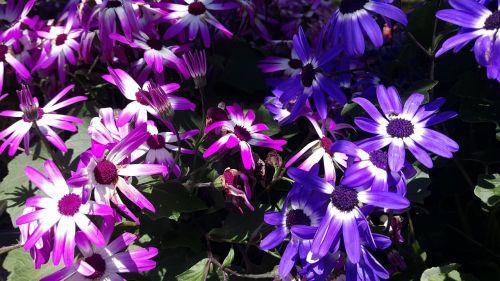 flowers garden spring