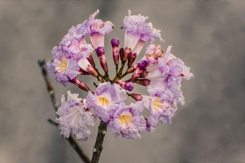flowers flower rosa