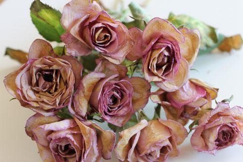 flowers roses ros
