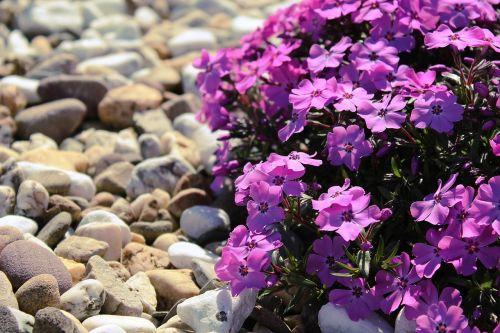 flowers purple plant