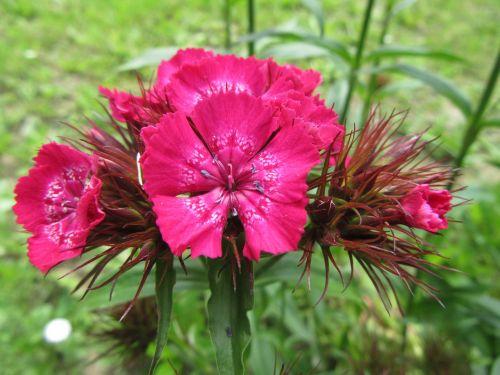 flowers plant green
