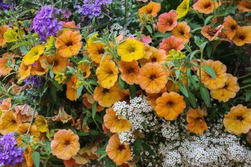 gėlės,jardiniere,gamta,sodas,spalvos