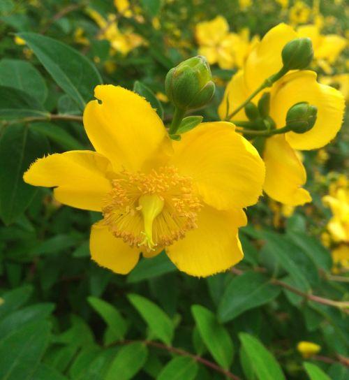 was hypercom flowers