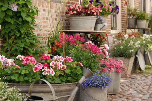 flowers bucket bowl