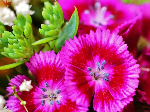 flowers summer pink