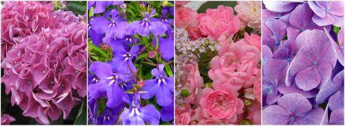 flowers collage hydrangeas