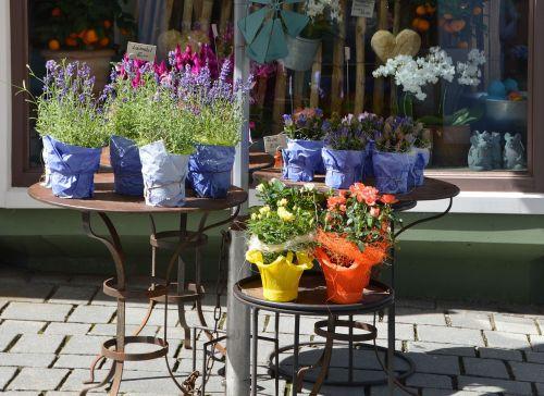 flowers herbs pots