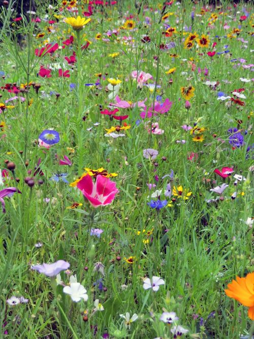 flowers meadow colorful