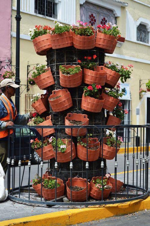 flowers pots peoples