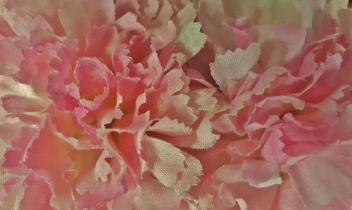 flowers chrysanthemums floral