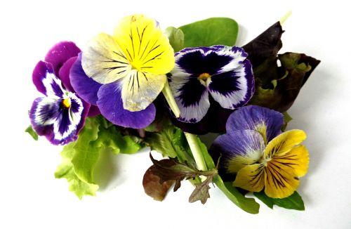 gėlės,laukinės gėlės,pieva,violetinė,vasara,orchidėja,mėlynas,gamtos gėlė,Uždaryti,lapai,makro,žydėti,gamta,botanika,žiedynas,mažos laukinės gėlės,flora,aštraus gėlė
