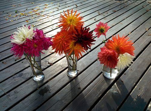 flowers dahlias vases