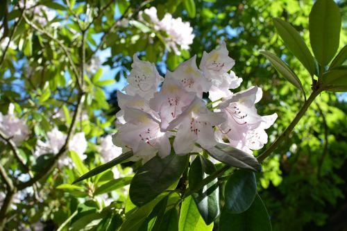 flowers tree bloom