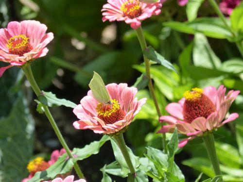 flowers butterfly libar