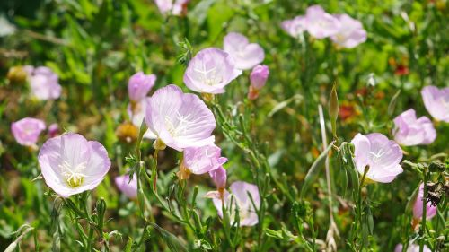 gėlės,kraštovaizdis,gamta,vasaros kraštovaizdis,gražūs kraštovaizdžiai,gėlių sritis