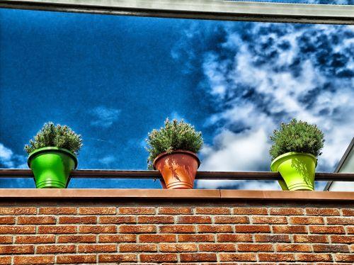 flowers plants flower pots
