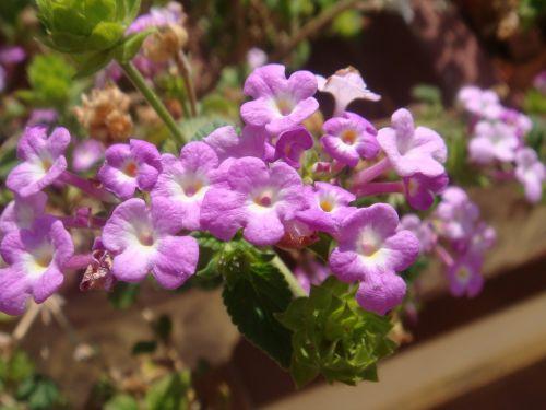flowers garden boxing ball