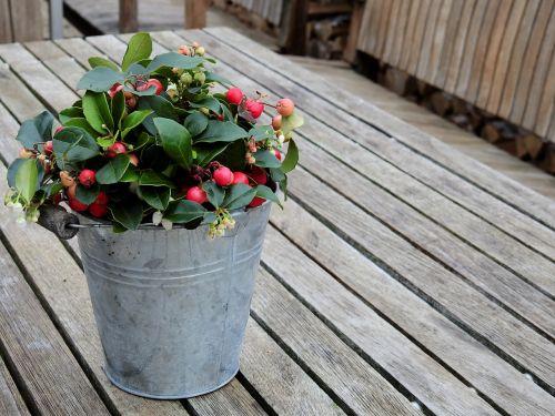 flowers table wood