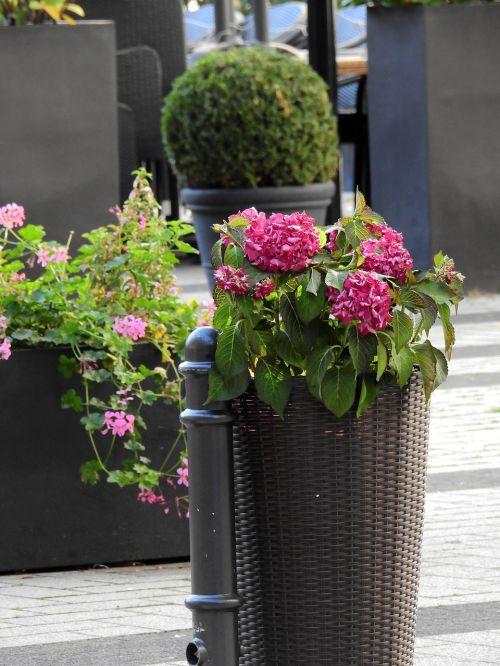 flowers bucket vessel