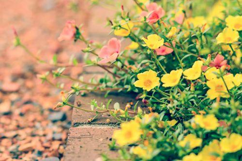 flowers natural garden