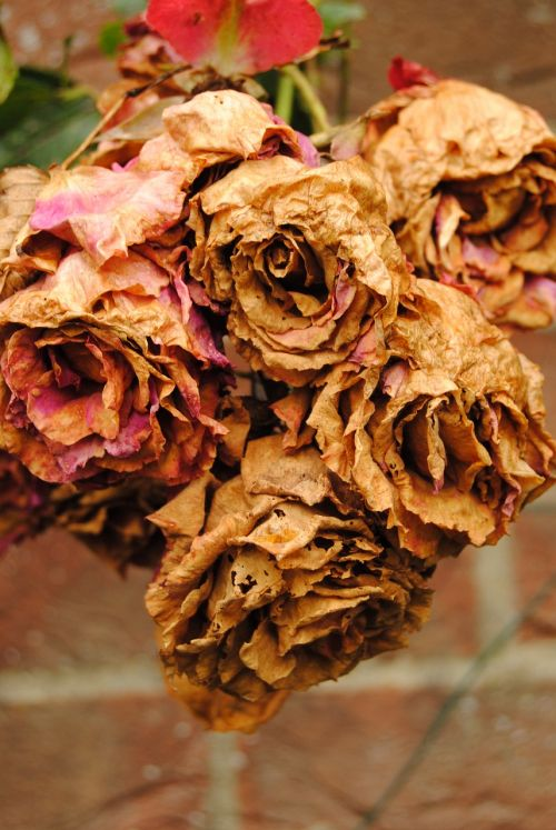 flowers aged withered
