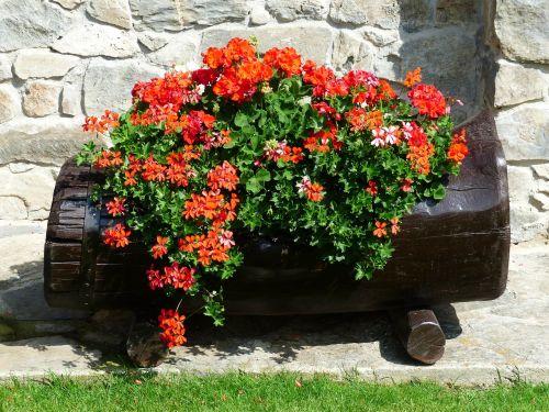flowers red orange